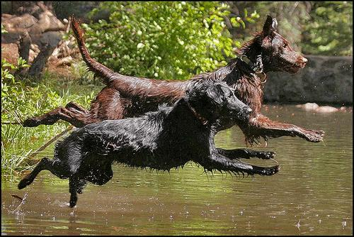 Synchronized jumping dogs